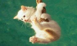 cats wallpaper funny screenshot 2/6