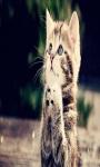 cats wallpaper funny screenshot 6/6