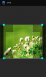 HD Flowers Wallpapers screenshot 4/6