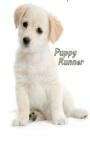 Puppy Runner screenshot 2/3