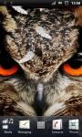 Wild Owl Live Wallpaper screenshot 1/3