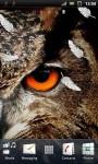 Wild Owl Live Wallpaper screenshot 3/3