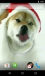 Christmas Puppy Licks Screen Live Wallpaper screenshot 3/4