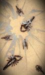 Scorpions Free screenshot 1/5