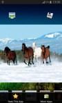 Amazing Horse Gallery screenshot 5/6