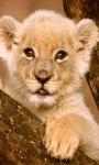 Lion Baby Live Wallpaper screenshot 1/3
