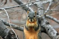 Cute Squirrel Wallpaper  screenshot 1/6