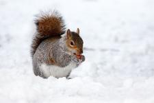 Cute Squirrel Wallpaper  screenshot 4/6