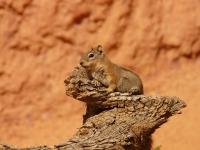 Cute Squirrel Wallpaper  screenshot 5/6