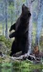 Forest Bear Live Wallpaper screenshot 1/3