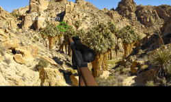Animal Hunter 3D screenshot 4/6
