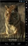 Tiger Resting Live Wallpaper screenshot 2/2