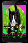 Rare Cat Breeds From Around The World screenshot 1/4