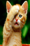 Rare Cat Breeds From Around The World screenshot 2/4