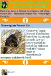 Rare Cat Breeds From Around The World screenshot 4/4