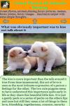 Cutest Photos Of Animals Kissing screenshot 3/3