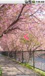Sakura Blossom Live Wallpaper screenshot 1/4