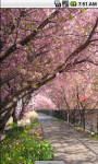 Sakura Blossom Live Wallpaper screenshot 2/4