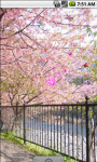 Sakura Blossom Live Wallpaper screenshot 3/4