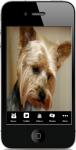 Different Terrier Dogs screenshot 1/4