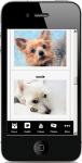 Different Terrier Dogs screenshot 4/4