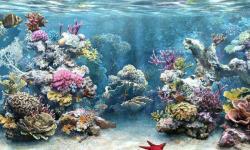 Aquarium fish wallpaper new screenshot 1/6