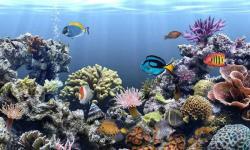 Aquarium fish wallpaper new screenshot 4/6