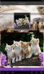 Kittens live Wallpaper  screenshot 1/5