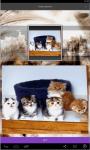 Kittens live Wallpaper  screenshot 2/5