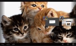 Kittens live Wallpaper  screenshot 5/5