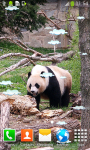 Cute Panda Live Wallpapers screenshot 5/6