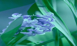 Blue Flower Lwp screenshot 2/3