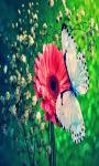 Butterfly Live screenshot 2/4