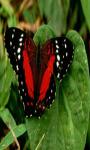 Butterfly Live screenshot 3/4