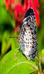 Butterfly Live screenshot 4/4