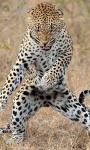 Best Leopard Wallpaper screenshot 3/6