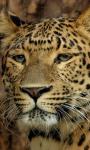 Best Leopard Wallpaper screenshot 4/6