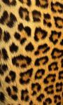 Best Leopard Wallpaper screenshot 5/6