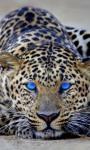 Best Leopard Wallpaper screenshot 6/6