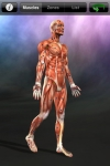 Muscle Trigger Points screenshot 1/1