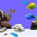 aquaclownfish screenshot 1/1