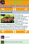 The Lifecycle of a Butterfly screenshot 3/3