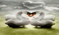 Swan In Love Live Wallpaper screenshot 2/3