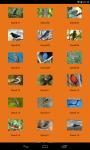 HD Bird Sounds screenshot 1/2
