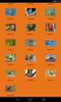 HD Bird Sounds screenshot 2/2