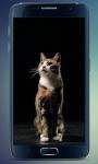 Fluffy Kitten Live Wallpaper screenshot 1/5