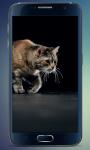 Fluffy Kitten Live Wallpaper screenshot 2/5