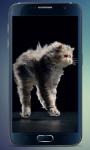 Fluffy Kitten Live Wallpaper screenshot 3/5