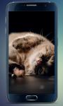 Fluffy Kitten Live Wallpaper screenshot 4/5