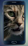 Fluffy Kitten Live Wallpaper screenshot 5/5